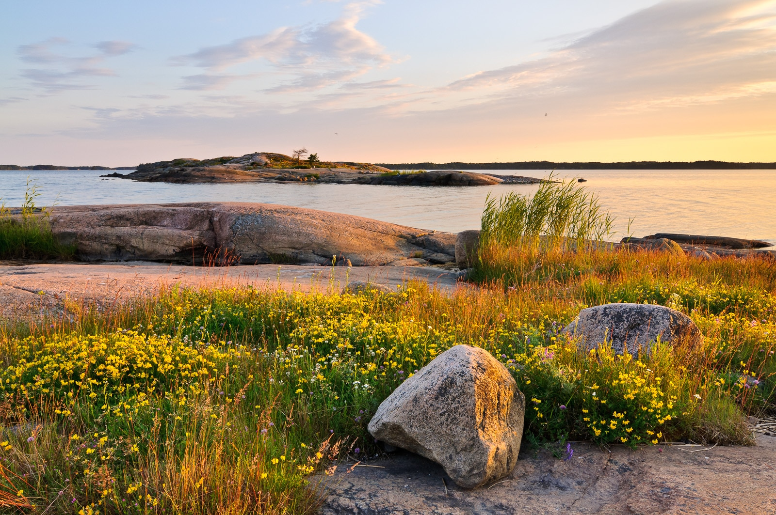 Secret location to the Gulf of Finland and the Baltic Sea in summer. Smooth and warm rock beach with wild flowers blooming. Nature near Helsinki, Finland.