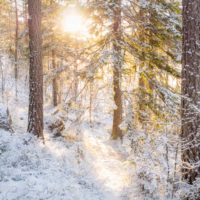 Nuuksio National Park in winter. Best time of winter, snow and sunshine. Finnish nature near Helsinki, Finland.