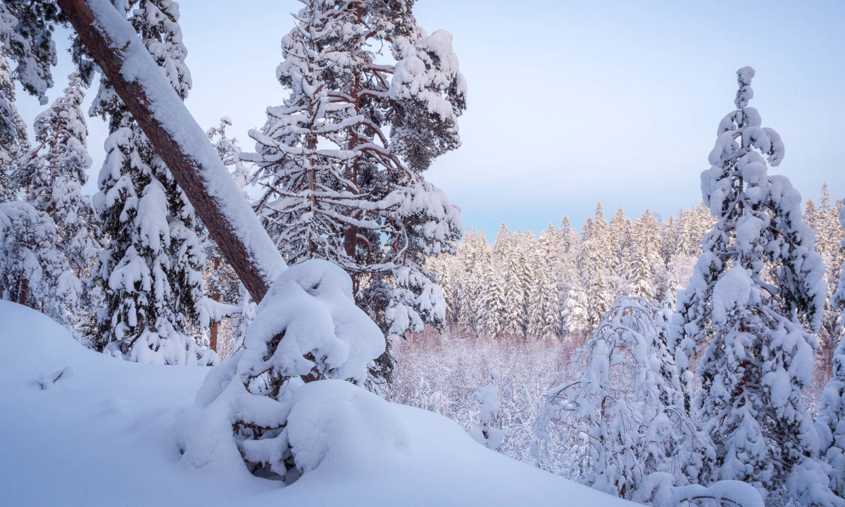 Nuuksio National Park in winter. Trees covered in snow, the landscape is so beautiful. Best of winter in Finland. Finnish nature near Helsinki, Finland.
