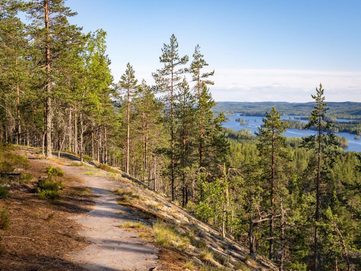 Kolin kansallispuiston ja Herajärven kierroksen polut kulkevat korkeilla kallioilla.