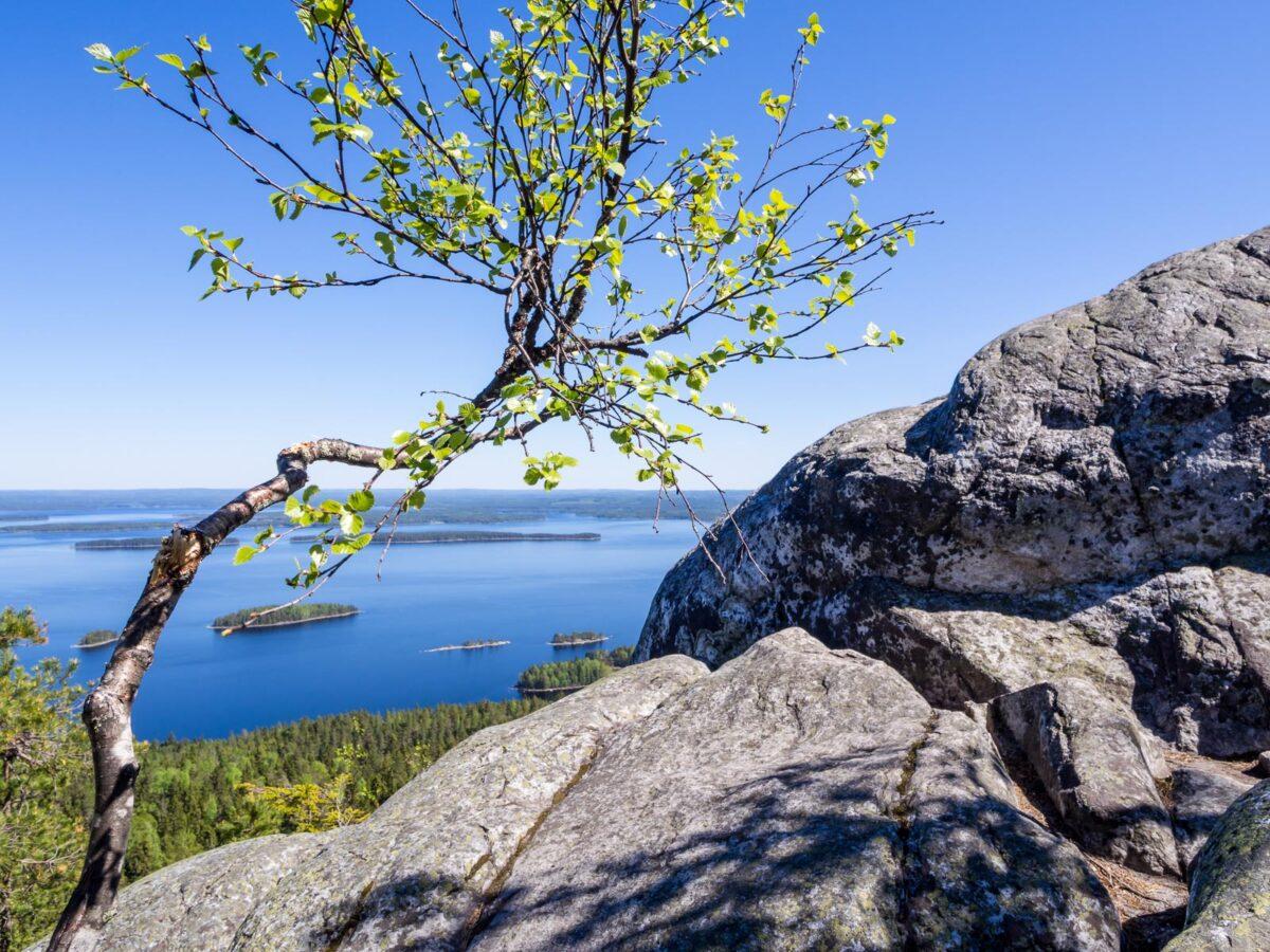 Kolin kansallispuisto ja Herajärven kierroksen vaeltaminen.