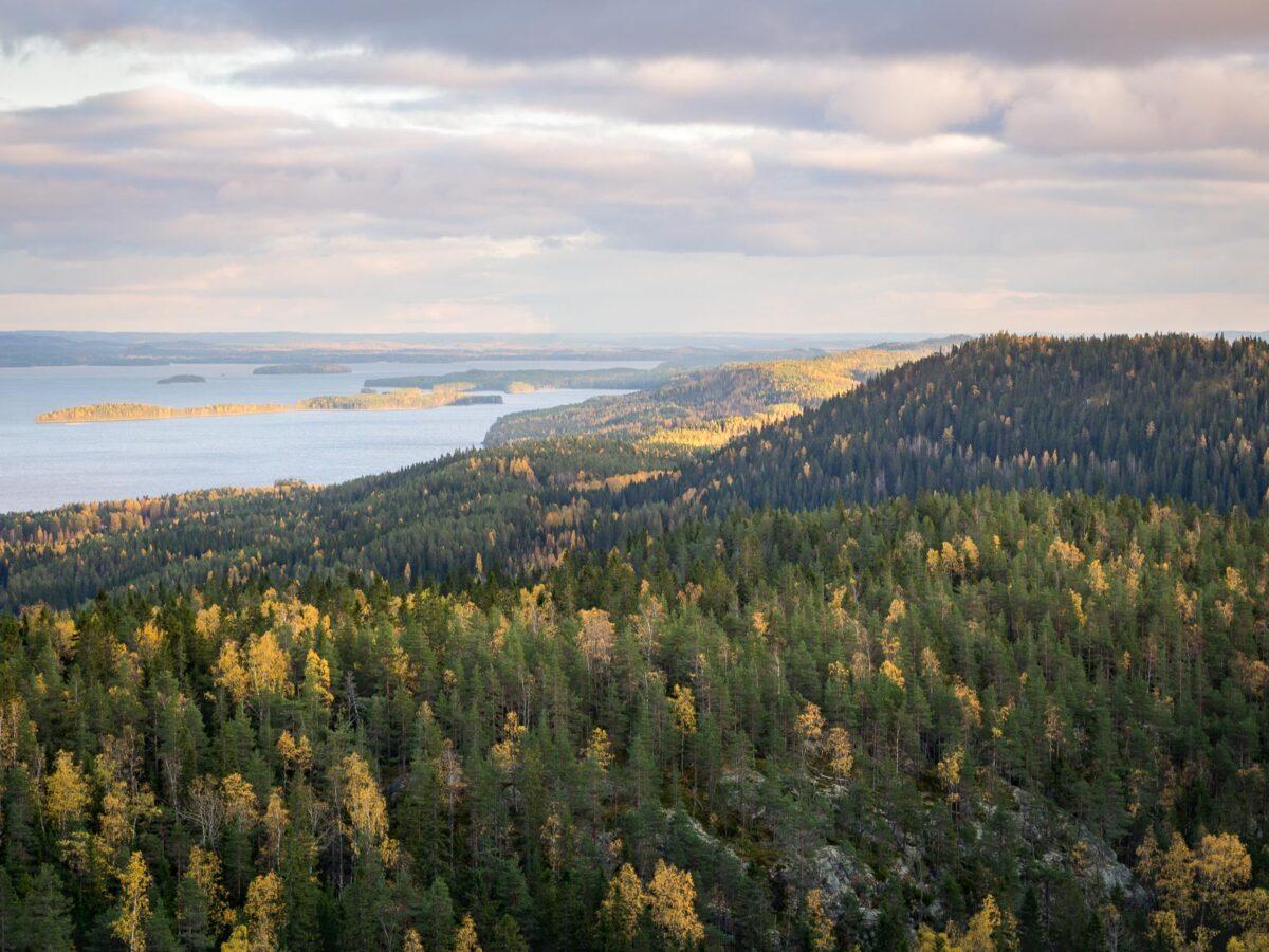 Suomen kansallismaisema vaellusmatkalla Kolin kansallispuistoon.