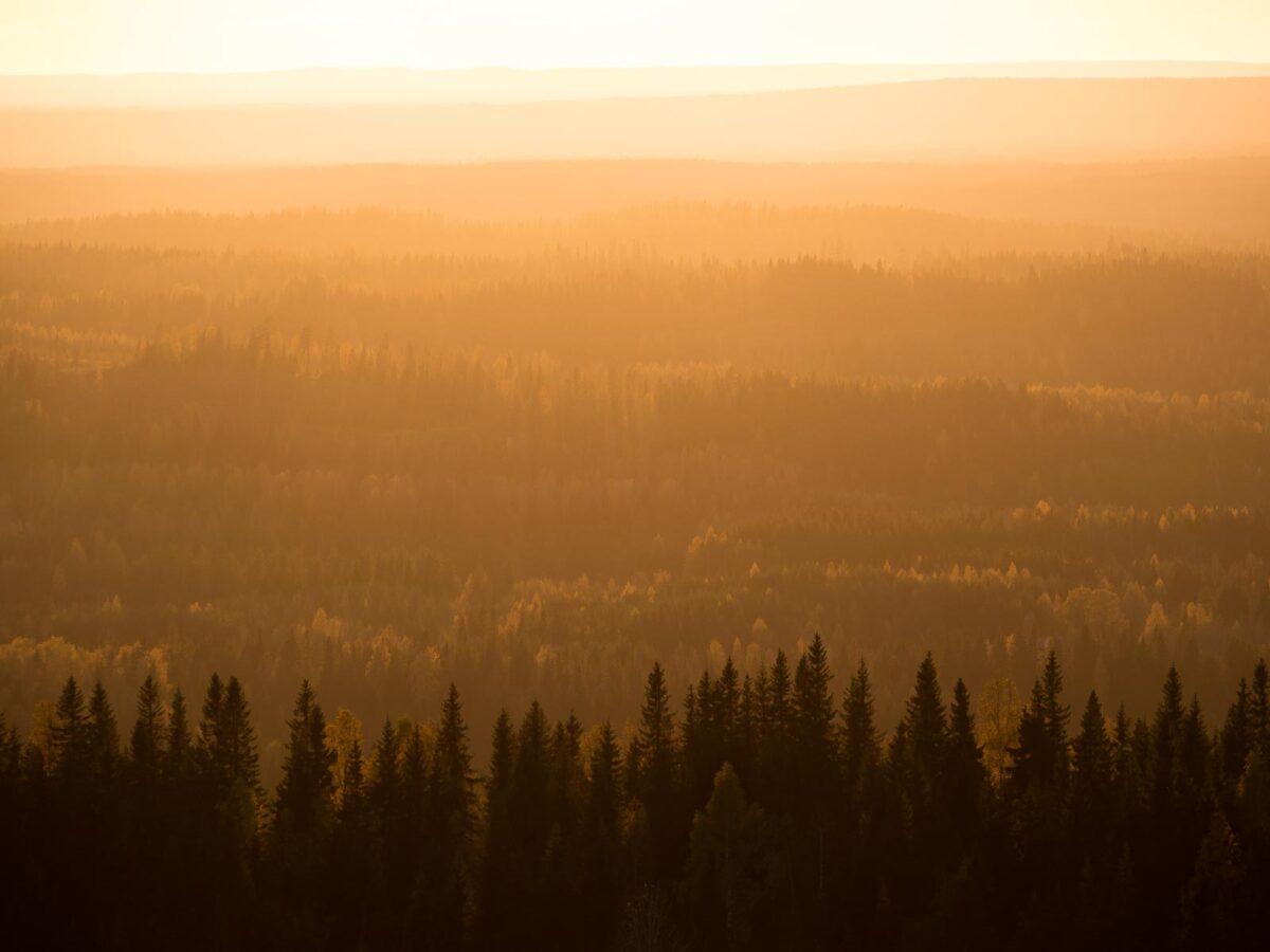 Auringonlasku Kolin huipulta.