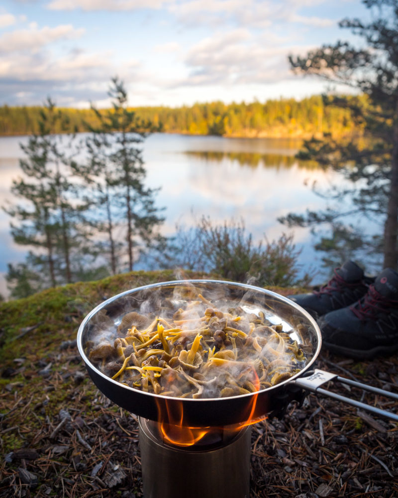 Nuuksio National Park in fall. Cooking fresh mushrooms in the forest in September. Finnish nature near Helsinki, Finland.