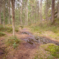 Nuuksio National Park in spring, in April. Some wet spots on trails after snow melting. Finnish nature near Helsinki, Finland.