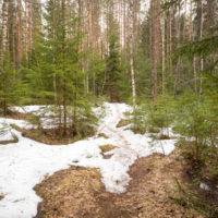 Nuuksio National Park in spring, in April. Last snow before summer. Finnish nature near Helsinki, Finland.
