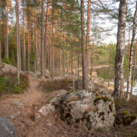 Nuuksio National Park in spring, in April. Dry trails on top of rocks. Finnish nature near Helsinki, Finland.