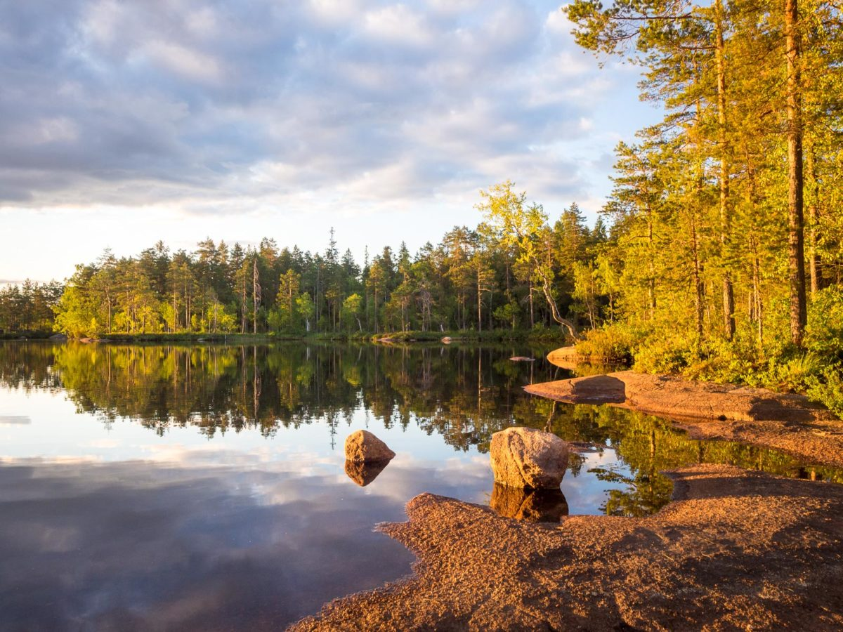 Nuuksio National Park in summer. Calm midsummer evening. Nature near Helsinki, Finland.