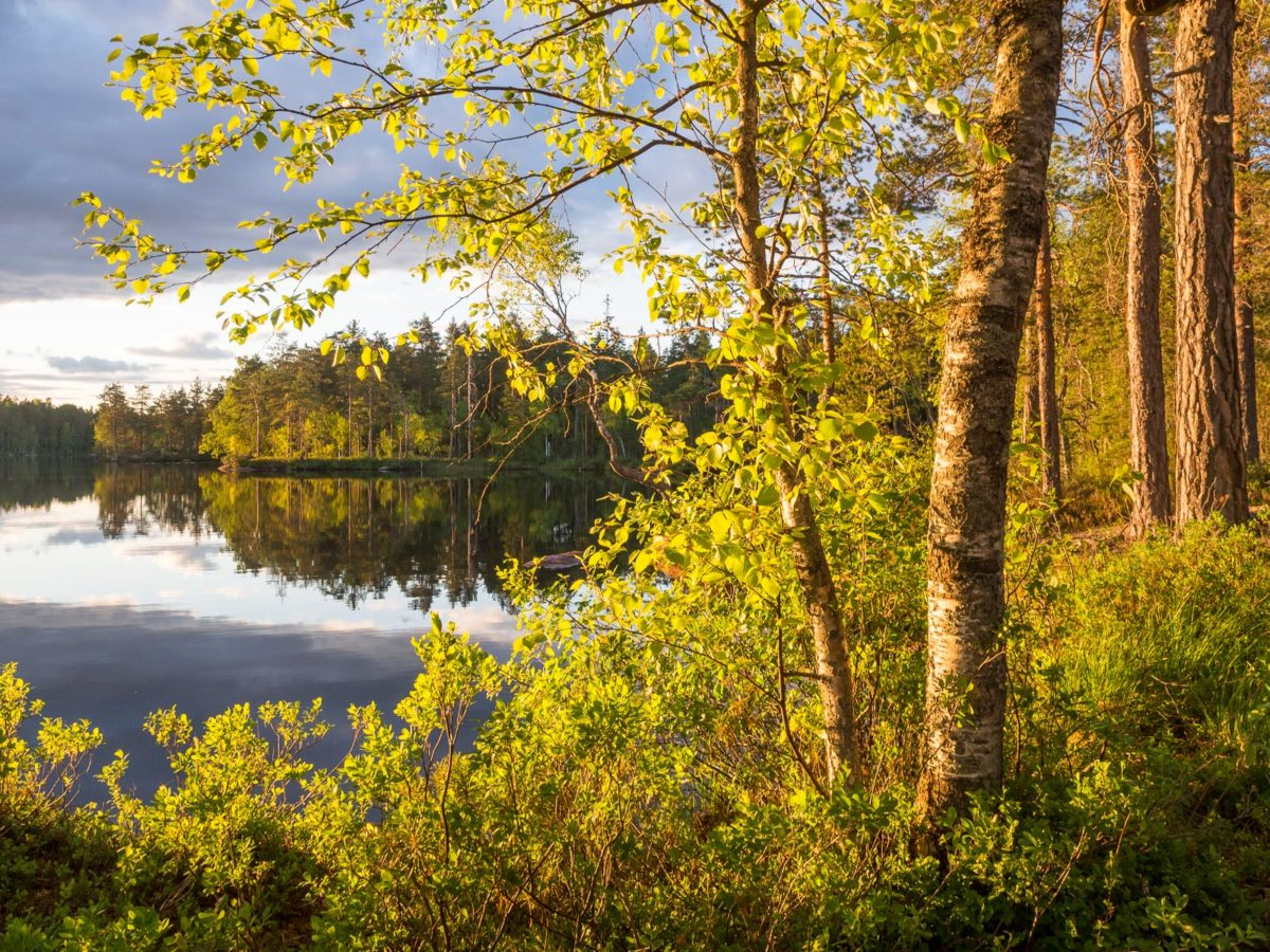 Nuuksio National Park in spring. Beautiful spring evening at a calm lake. Nature near Helsinki, Finland.