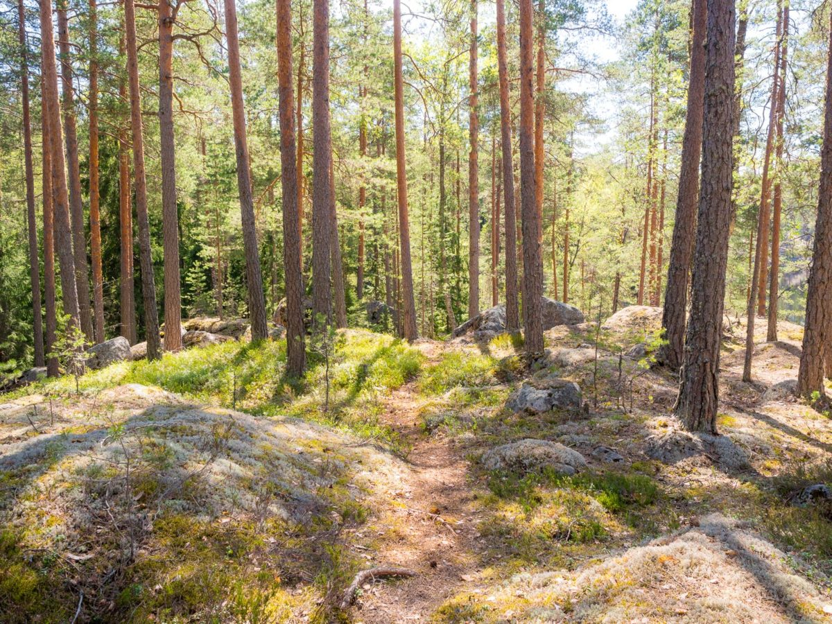 Nuuksio National Park in spring in May. Amazing weather and quiet trails in May. Nature near Helsinki, Finland.