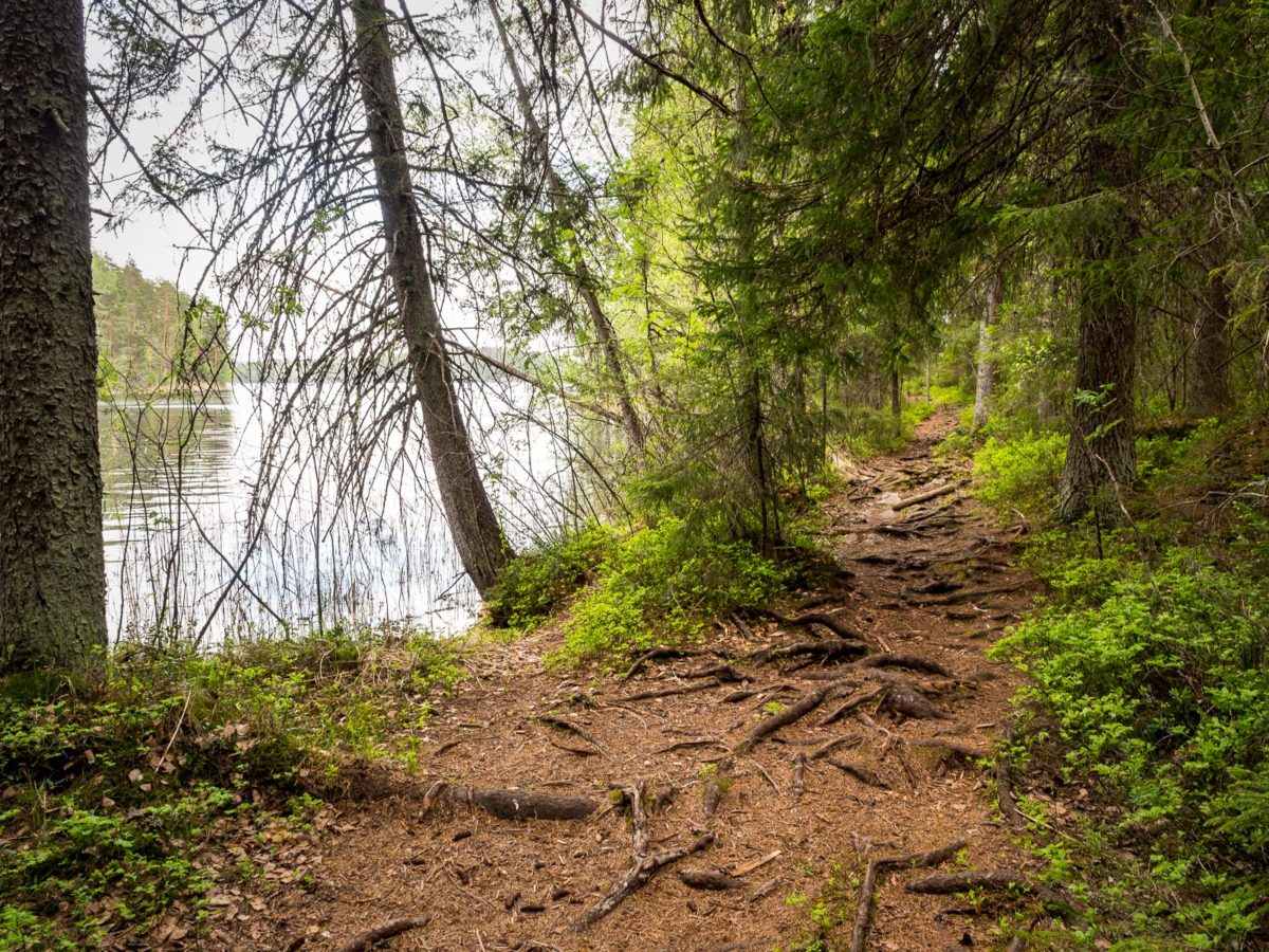 Nuuksio National Park in spring, in May. Walk right next to the lakes on quiet trails. Finnish nature near Helsinki, Finland.