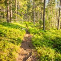 Nuuksio National Park in spring, in May. Trail through the forest. Finnish nature near Helsinki, Finland.