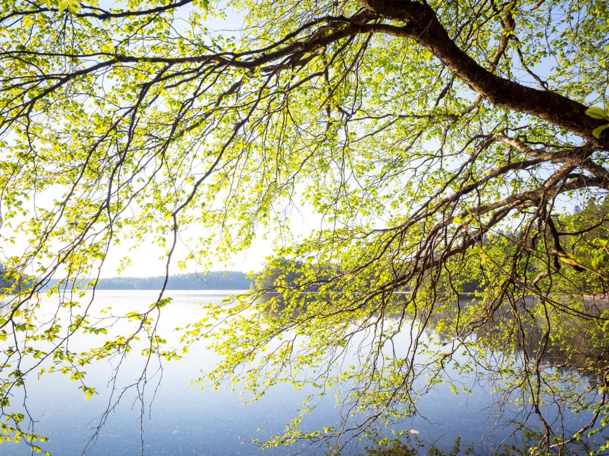 Nuuksio National Park in spring, in May. Beautiful new leaves at the lakes. Finnish nature near Helsinki, Finland.