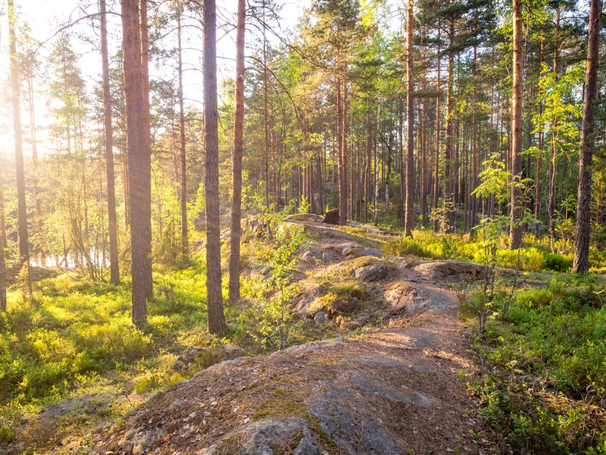 Nuuksio National Park in spring in May. Best trails where you can be alone. Nature near Helsinki, Finland.