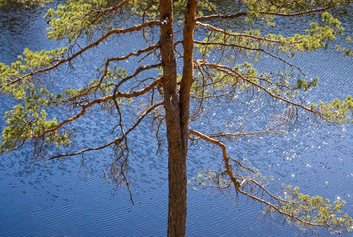 Nuuksio National Park in summer. The sweetness of the beginning of summer in Finland, as everything comes back to life and the lakes sparkle in sunlight. Nature near Helsinki, Finland.