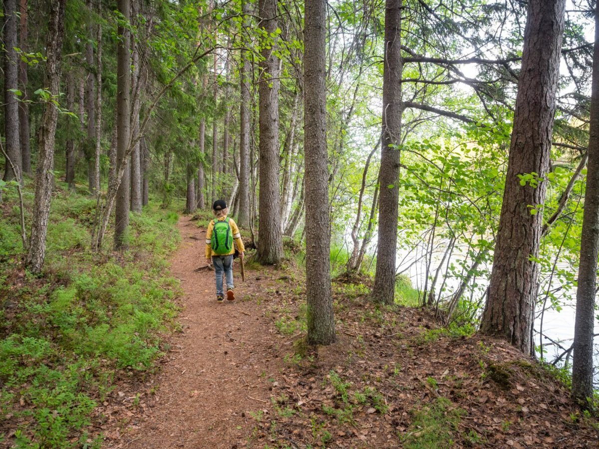 Nuuksio National Park in summer, in June. Take your children with you to the forest. Finland's nature near Helsinki, Finland.