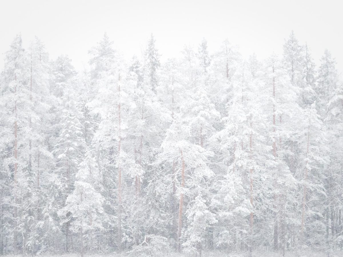 Nuuksio National Park in winter in December. Snow and frost covered trees in forest. Nature near Helsinki, Finland.