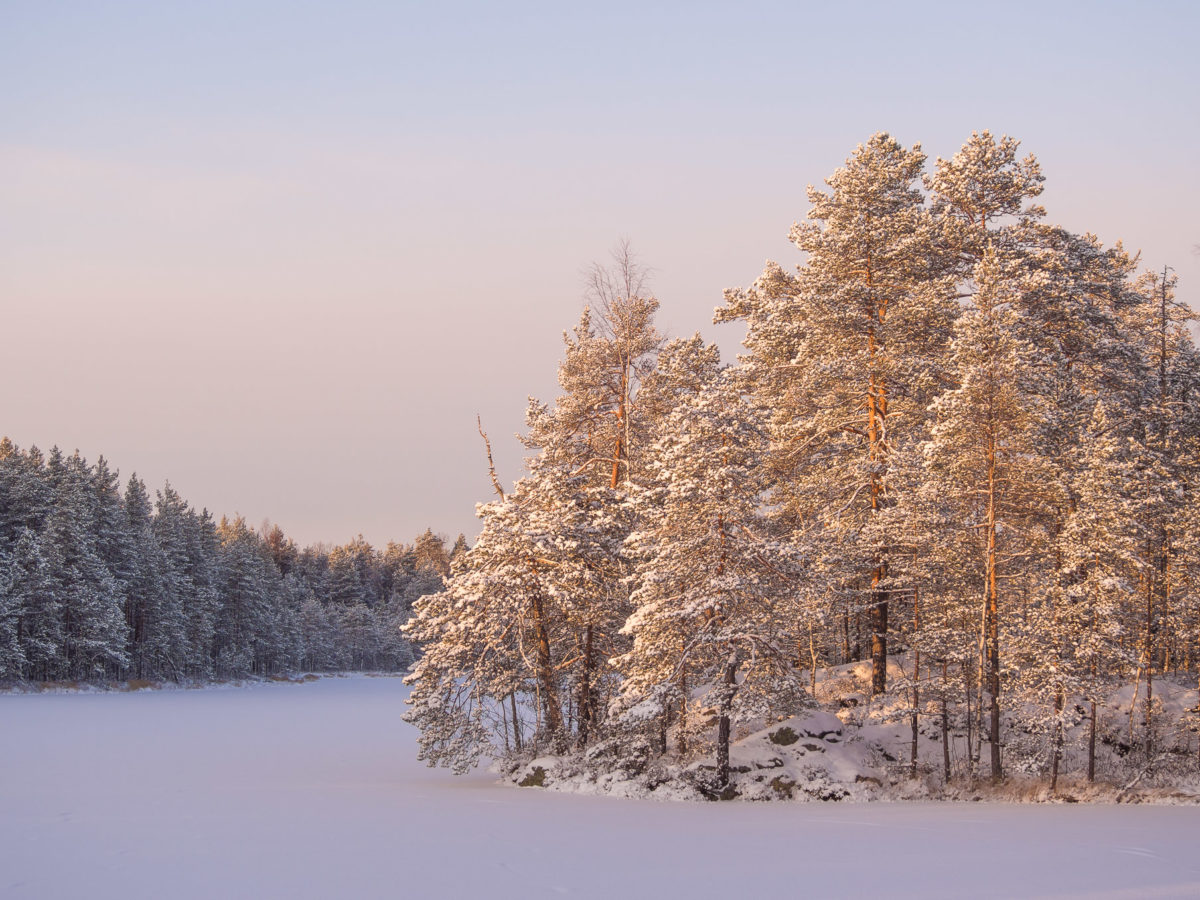Nuuksio National Park in winter. The amazing beauty and peacefulness of a Finnish forest in January, when all the trees are covered in snow. Nature near Helsinki, Finland.