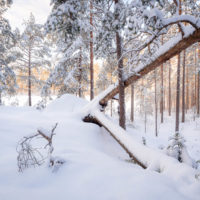 Nuuksio National Park in winter. Winter wonderland in January, so close to Helsinki! Finnish nature near Helsinki, Finland.
