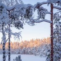 Nuuksio National Park in winter. So much snow, winter at it's best. Finnish nature near Helsinki, Finland.