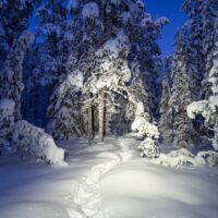 Nuuksio National Park in winter. Snowshoe trail at night with headtorch. Finnish nature near Helsinki, Finland.