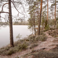 Nuuksio National Park in winter. Peaceful forest and quiet paths in Finland in December. Nature near Helsinki, Finland.