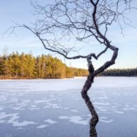 Nuuksio National Park in winter. Clear weather and a frozen lake in November. Nature near Helsinki, Finland.