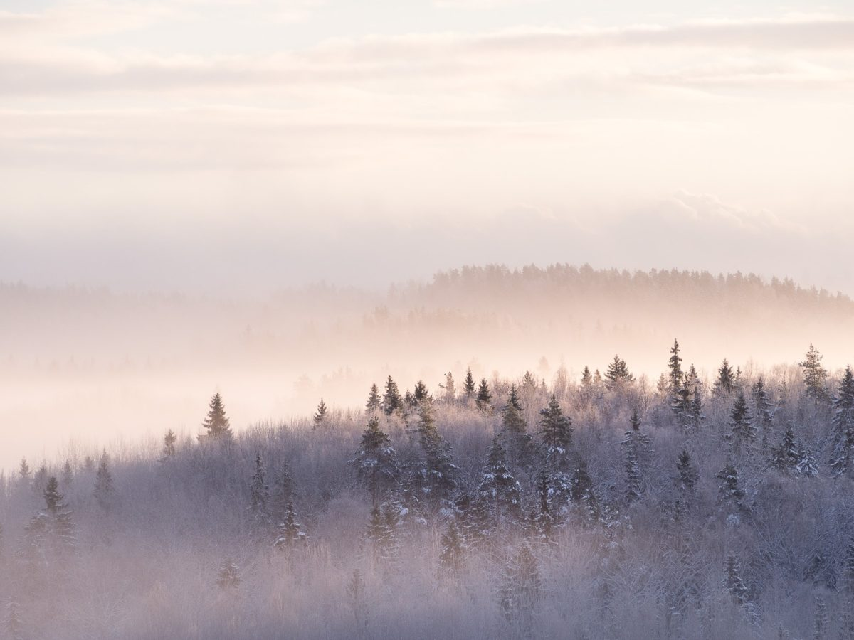 Nuuksio National Park in winter. Rising sun lighting the low hanging mist in December. Nature near Helsinki, Finland.