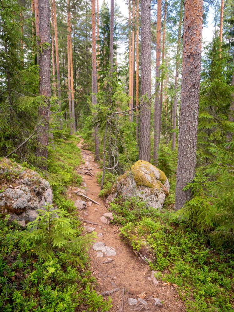 Repovesi National Park in summer, in June. Trails in the forest. Nature in Finland near Helsinki.