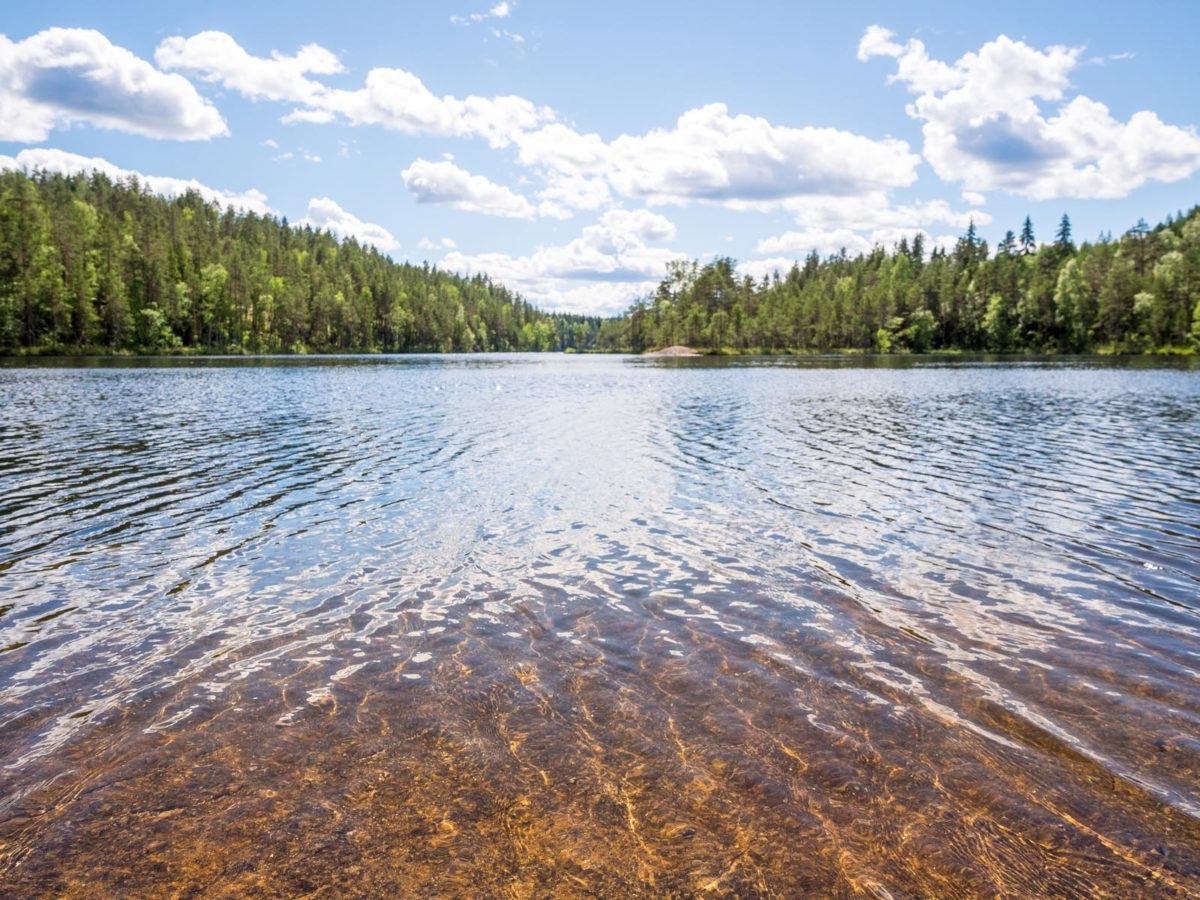 Repovesi National Park in summer, in June. Clear lakes and peace in the forest. Nature in Finland near Helsinki.
